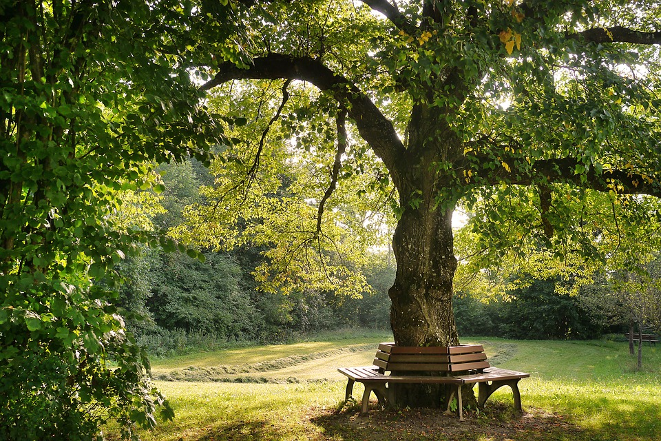 tree-2923837_960_720